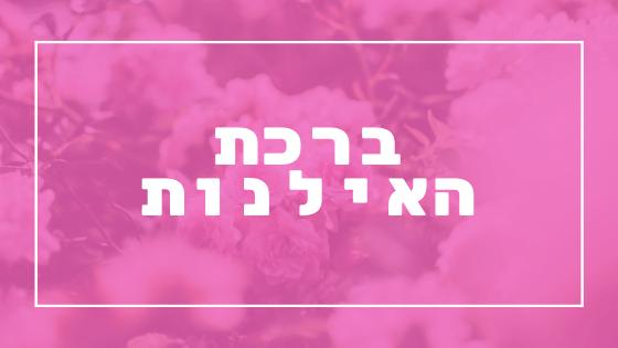 ברכת האילנות | פרשת יהדות